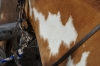 Warum mein Pferd wohl Batman hieß???
