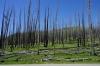 Waldbrand am regeneriren